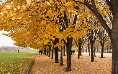 7 French Autumn Words You Must Learn